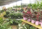 Deception Bay Indoor planting 6