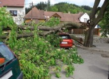 Kwikfynd Tree Cutting Services deceptionbay