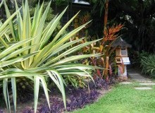 Kwikfynd Tropical Landscaping deceptionbay
